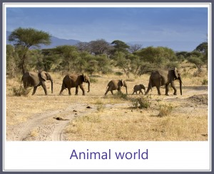 Animal world framed 1000PX