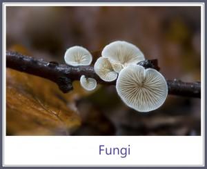 Fungi framed 1000PX