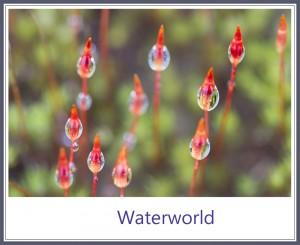 Waterworld 1000PX