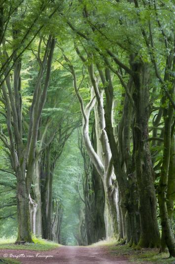 Devine Forest