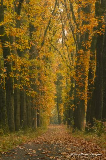 Back to the golden forest