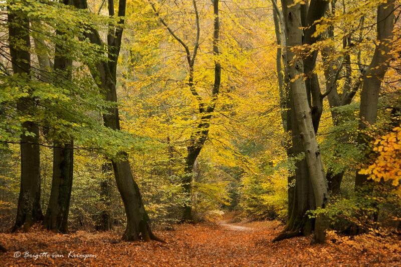 Golden Forest revisited
