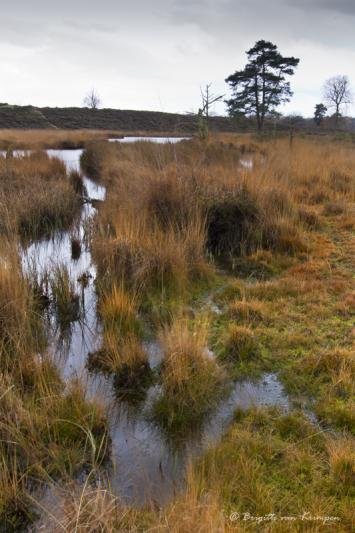 Wet Lands I