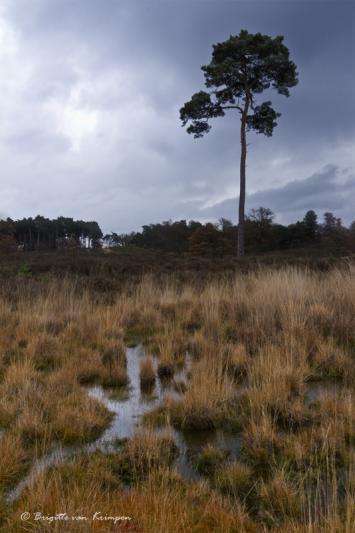 Wet Lands II