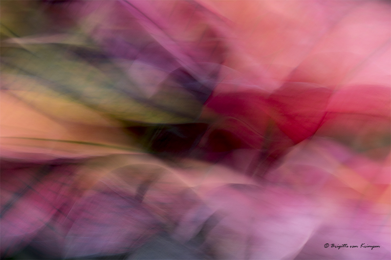 Abstract pur Sang