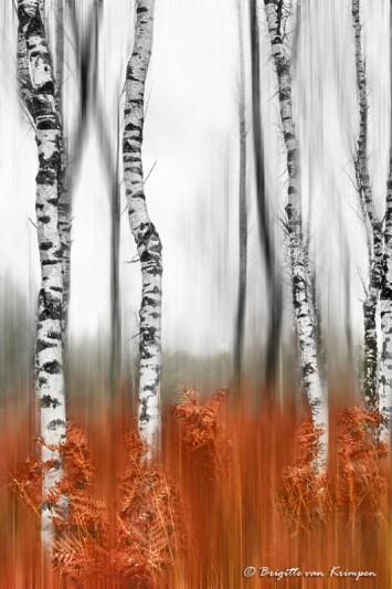 Autumn 3.0