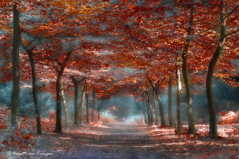 Red Fairyland