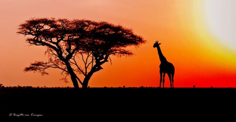 African mood